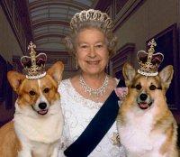 queen-corgis.jpg