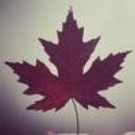 Maple_