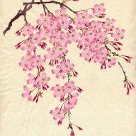 tiny cherry tree