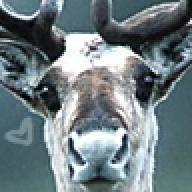 Cariboux