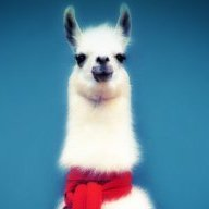 Fancy.Lama