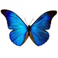 Butterflyfly