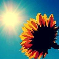 Like_the_sun