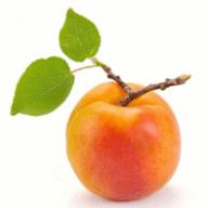 abricotte