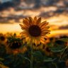Eli-Ohana